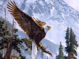 Featured Eagle